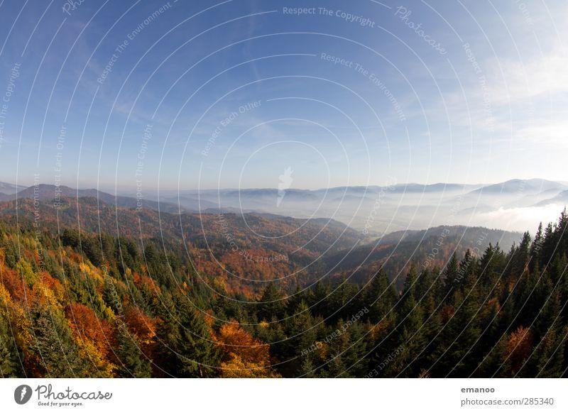 Schwarzwald Himmel Natur blau Ferien & Urlaub & Reisen schön Pflanze Baum Blatt Landschaft Wald Umwelt Berge u. Gebirge Herbst Wetter Klima Nebel