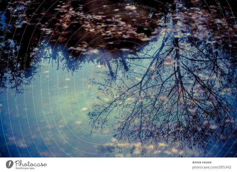 Herbstland Natur Landschaft Wasser Himmel Baum Wald Stimmung träumen Traurigkeit Trauer Einsamkeit Erholung ruhig Vergänglichkeit Reflexion & Spiegelung