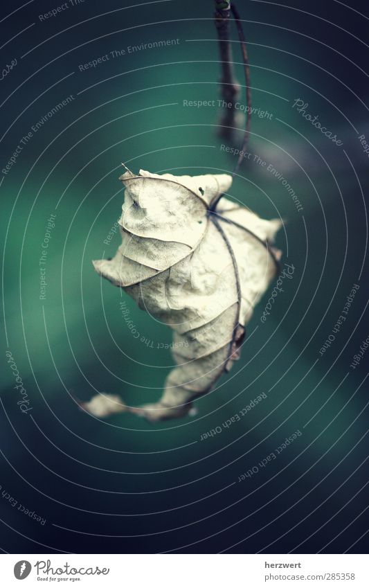 Wenn Worte fehlen Natur Pflanze Tier Blatt Umwelt Herbst Gefühle Vergänglichkeit Herbstlaub