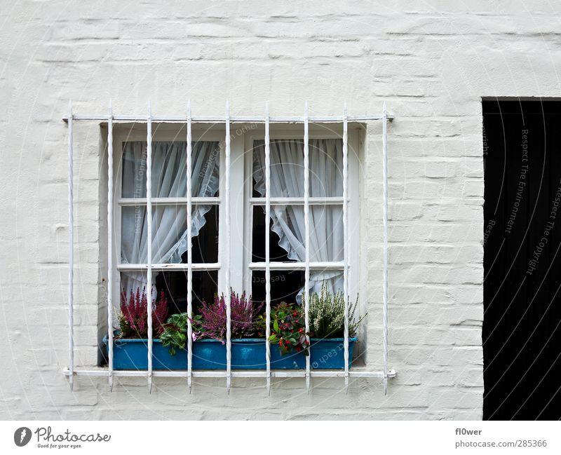 Gitterfenster Menschenleer Haus Bauwerk Gebäude Fenster Beton Metall alt hell blau schwarz weiß Tür Blumenkasten Wand Steinmauer Farbfoto Gedeckte Farben