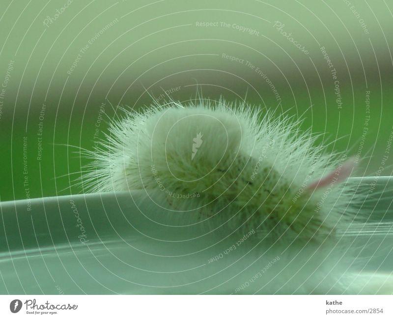raupe Unschärfe grün rosa Insekt Raupe Haare & Frisuren