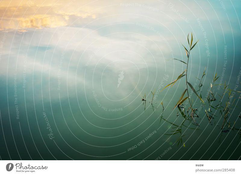 Stolz harmonisch Wohlgefühl Zufriedenheit ruhig Meditation Sommer Umwelt Natur Landschaft Urelemente Wasser Himmel Horizont Schönes Wetter Pflanze Gras Seeufer
