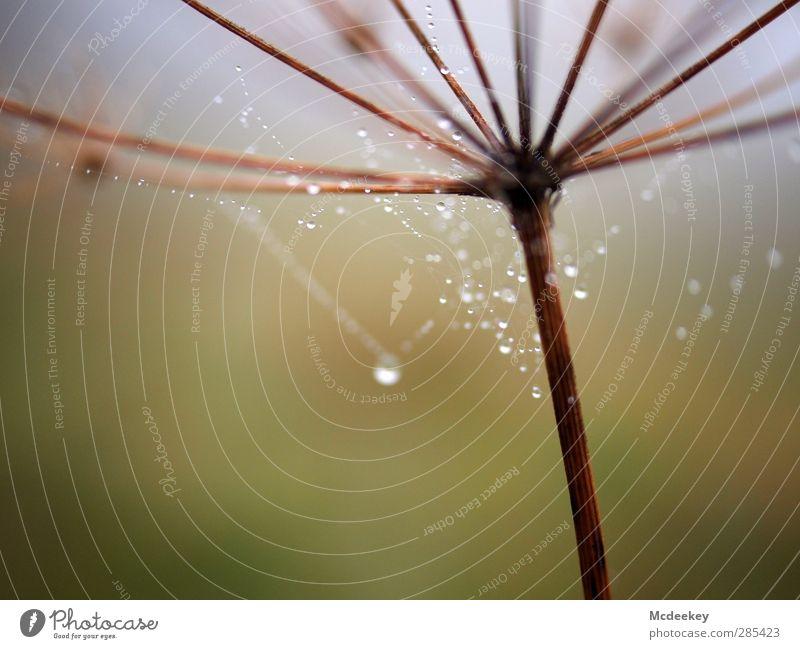 Morgentau (I) Natur Wasser grün weiß Pflanze Landschaft schwarz Umwelt Wiese kalt Herbst Gras grau klein braun natürlich