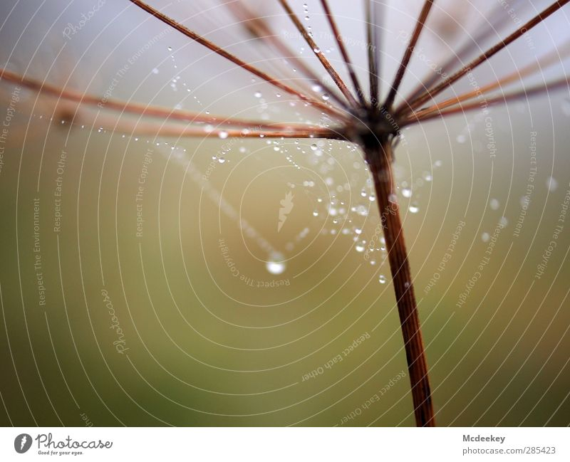 Morgentau (I) Umwelt Natur Landschaft Pflanze Wasser Wassertropfen Herbst Nebel Gras Sträucher Wiese Feld authentisch dünn eckig einfach kalt klein nass