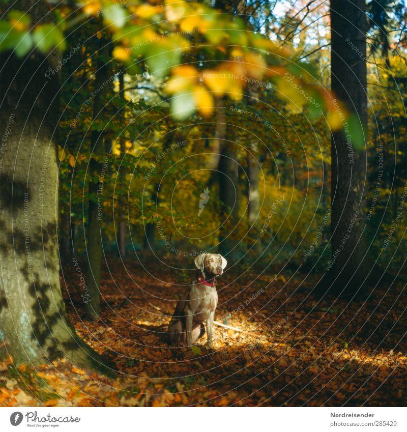 Tia Hund Natur Baum Tier Landschaft Wald Wärme Herbst Stimmung Freundschaft ästhetisch Schönes Wetter beobachten Schutz Vertrauen Wachsamkeit