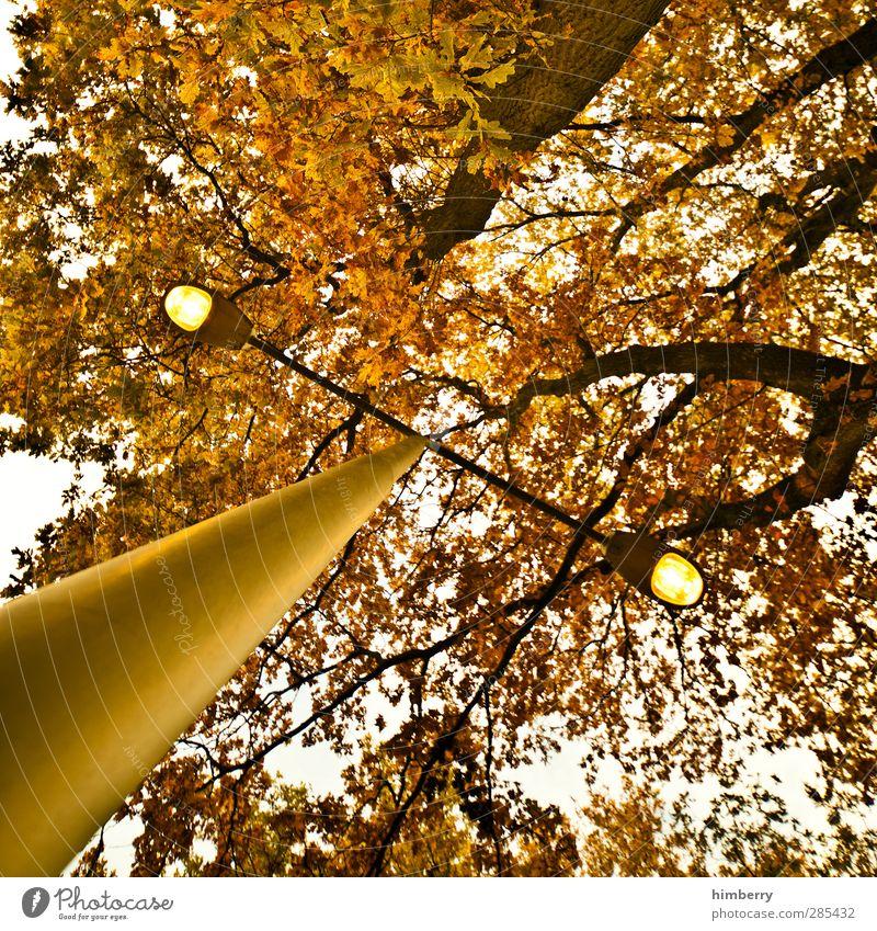 herbstlich(t) Natur Stadt Pflanze Baum Landschaft Wald Umwelt Herbst Kunst Klima Zufriedenheit Energiewirtschaft Vergänglichkeit Laterne Straßenbeleuchtung