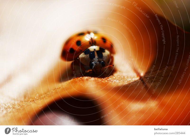 Häppi Börsdi, Inkje! Natur Pflanze Blatt Tier Umwelt Herbst braun sitzen Wildtier Schönes Wetter Flügel Tiergesicht Insekt verstecken Käfer krabbeln