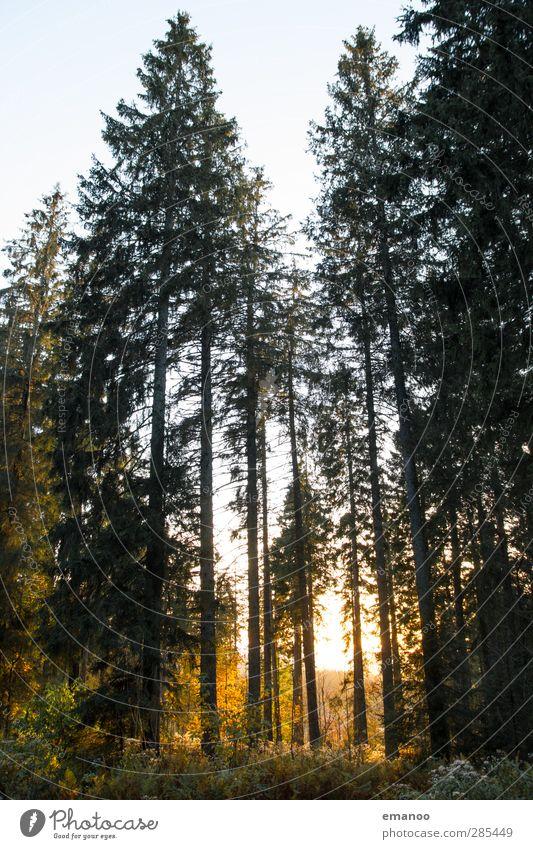 Schwarzwald II Himmel Natur Ferien & Urlaub & Reisen grün Pflanze Baum Sonne Landschaft Wald gelb Umwelt Wärme Berge u. Gebirge Herbst Park natürlich