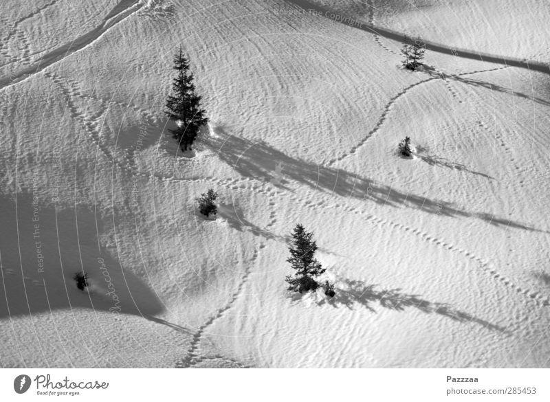 Verkehrsknotenpunkt Pflanze Baum Tier Berge u. Gebirge Schnee Wege & Pfade Eis laufen wandern Frost Alpen Skier Verkehrswege Tanne Fußspur kreuzen