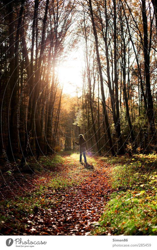 Immer dem Licht nach Mensch Natur Jugendliche Baum rot Sonne ruhig Wald Erwachsene Herbst Tod feminin Glück 18-30 Jahre träumen braun