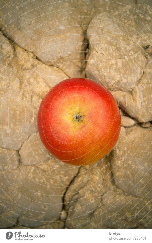 apple on the Rock Apfel Bioprodukte Sommer Felsen Duft leuchten ästhetisch frisch lecker positiv rund saftig schön süß rot Vorfreude genießen reif