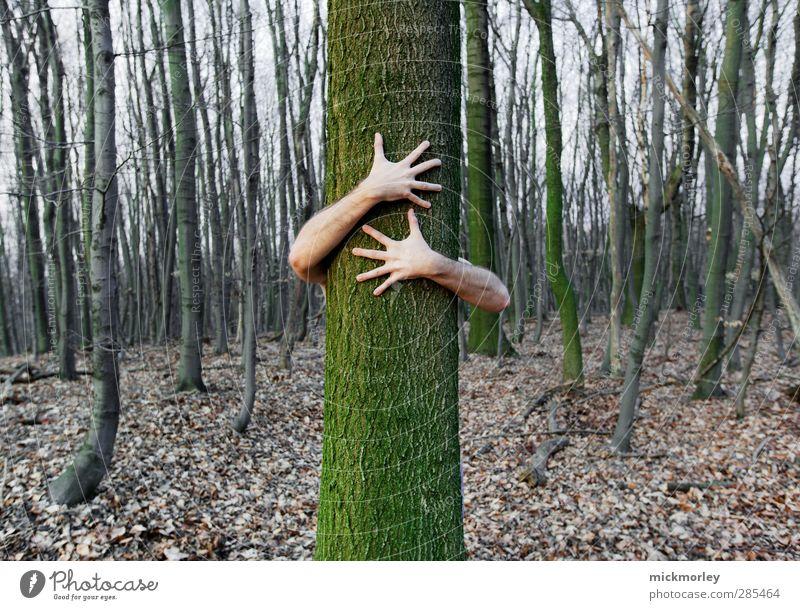 Love connection Natur Baum ruhig Landschaft Erholung Wald Umwelt Leben Freiheit Gesundheit natürlich außergewöhnlich Kraft Zufriedenheit authentisch Wachstum