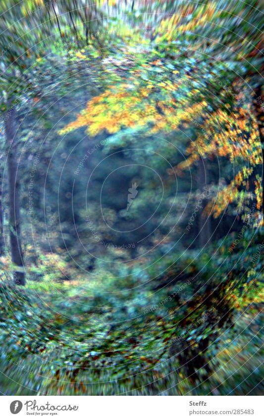 Ein Tor zum Feenwald Natur grün Baum Ferne Wald Herbst träumen Perspektive fantastisch geheimnisvoll tief Zweig Herbstlaub Surrealismus herbstlich