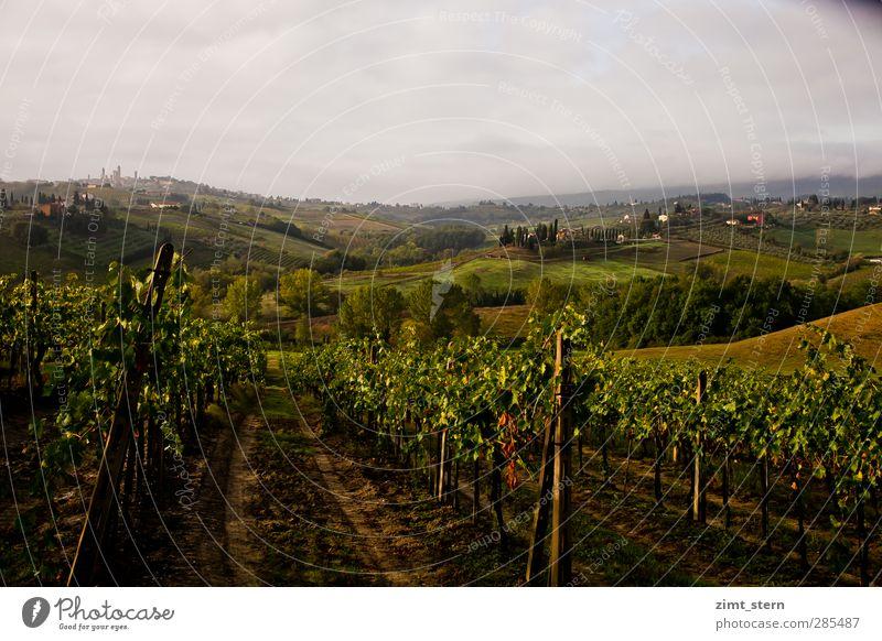 Weinberge in der Toskana Ferien & Urlaub & Reisen grün Wolken ruhig Landschaft Herbst Leben grau Freiheit braun Feld Zufriedenheit Tourismus Ausflug Urelemente