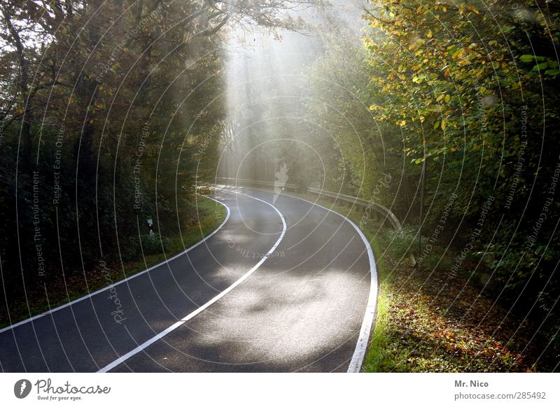 unterwegs Umwelt Natur Sommer Herbst Klima Schönes Wetter Baum Sträucher Wald Verkehr Autofahren Straße Wege & Pfade Freiheit Idylle Asphalt Landstraße