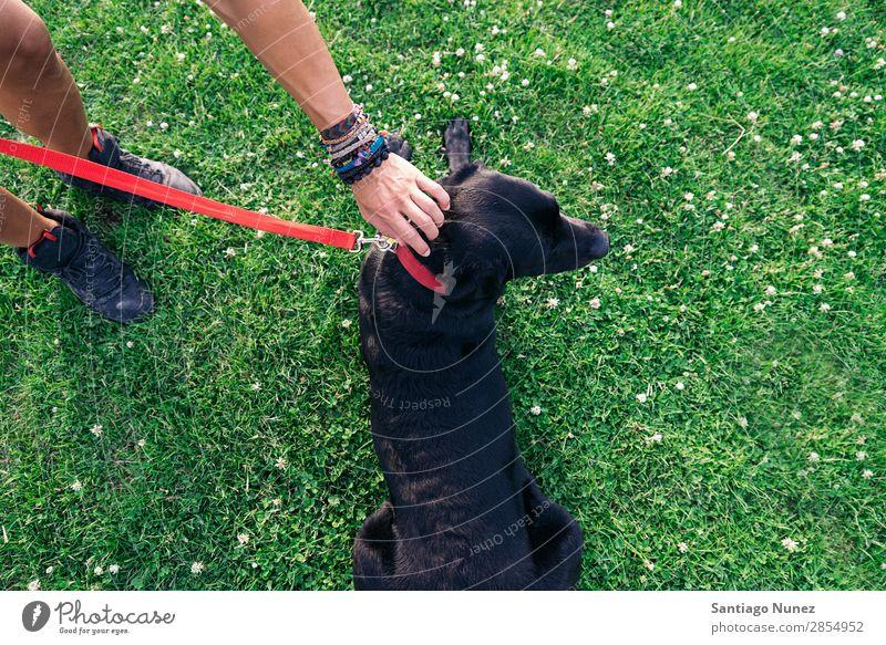 Der Mann hat Spaß mit seinem Hund. Haustier Park Besitzer Mensch grün anleinen laufen Tier rennen Glück Lifestyle Erwachsene Typ Sommer Kaukasier Freude Gras