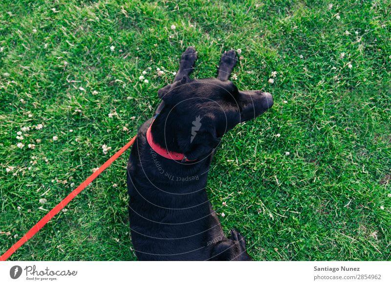 ruhender Hund mit seinem Besitzer. Mann Haustier Park Mensch grün anleinen laufen Tier rennen Glück Lifestyle Erwachsene Typ Sommer Kaukasier Freude Gras