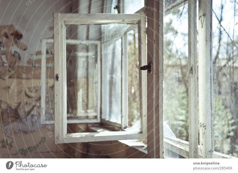 kommse rein, könnse rausgucken. Häusliches Leben Raum Ruine Fenster alt dreckig kaputt trist Stadt Vergänglichkeit Zerstörung lüften Fensterblick Farbfoto