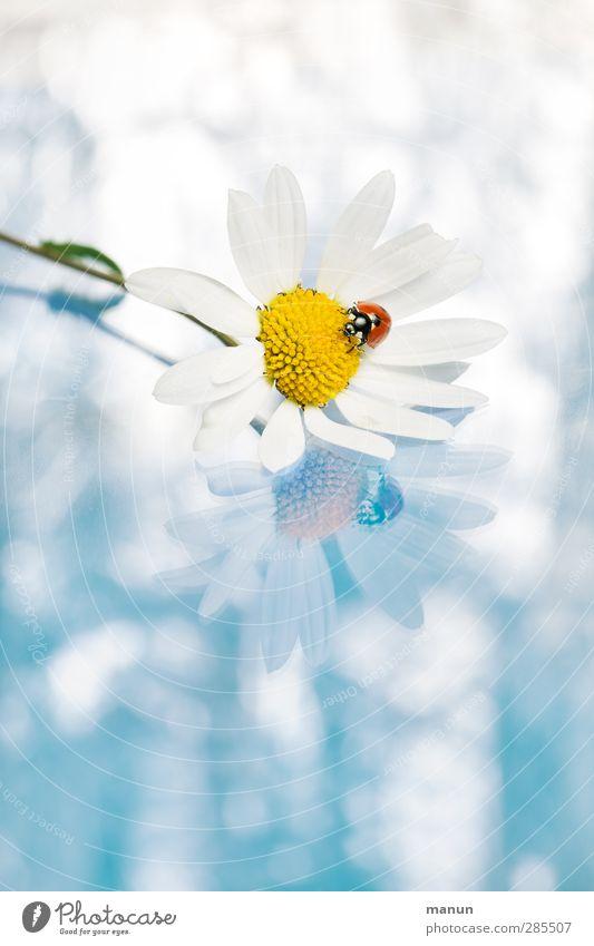 Ladybug Natur blau weiß Tier Gefühle Glück Blüte Feste & Feiern Geburtstag Wildtier Zufriedenheit Fröhlichkeit Hochzeit Wunsch Zeichen Lebensfreude