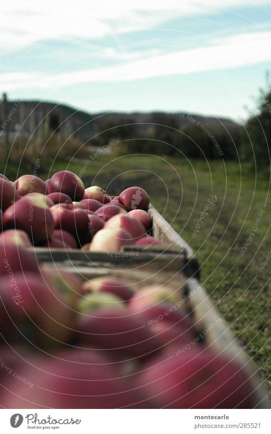 neue ernte Himmel Natur Wolken Landschaft Umwelt Wiese Herbst natürlich Feld Frucht Lebensmittel authentisch frisch Schönes Wetter süß rund