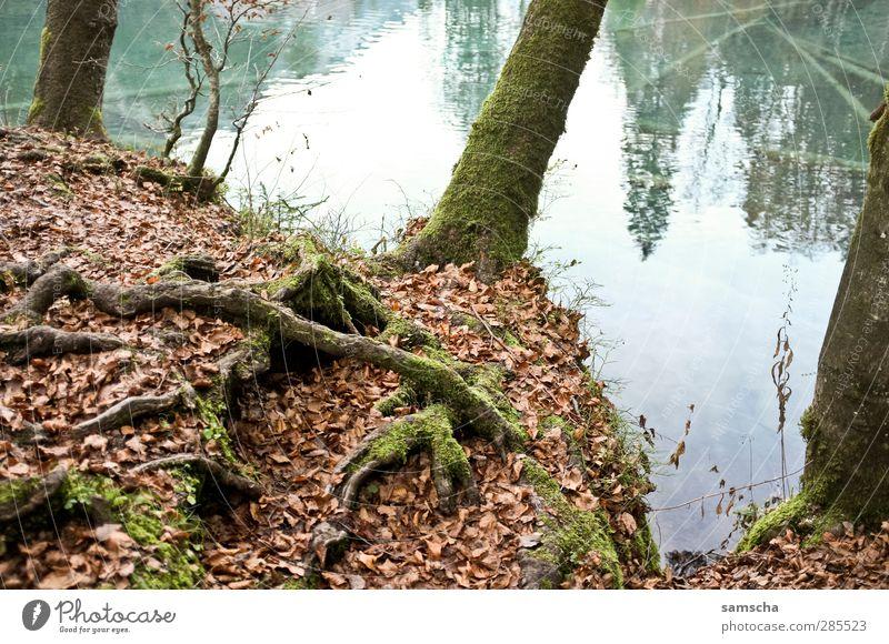 Bergsee Natur blau Wasser Baum Blatt Landschaft Wald Herbst See Seeufer Baumstamm Angeln Herbstlaub Am Rand Teich herbstlich