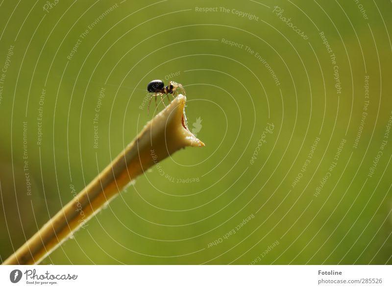 Hier entsteht ein Zimmer mit Aussicht Umwelt Natur Pflanze Tier Herbst hell klein nah natürlich grün Spinne spinnen Stengel herbstlich Farbfoto mehrfarbig