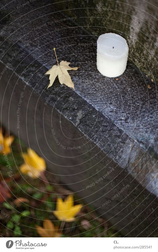 kerze Natur Einsamkeit Blatt ruhig kalt Herbst Tod Gefühle Traurigkeit Stein Regen Erde nass trist Vergänglichkeit Trauer