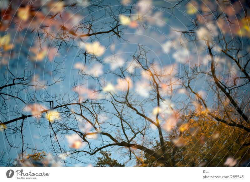 pfütze Natur Wasser Baum Einsamkeit Blatt Landschaft Wald Umwelt kalt Herbst Garten Park Regen nass Vergänglichkeit Sehnsucht