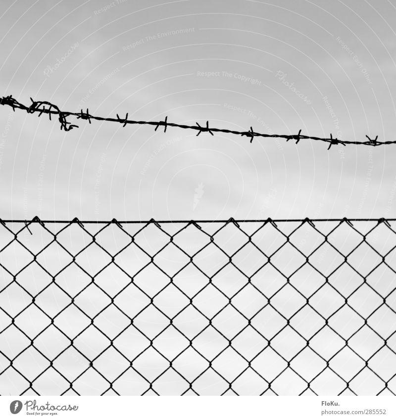 Keep out! schwarz grau Metall Linie gefährlich bedrohlich dünn Zaun Grenze Rost Verbote Politik & Staat stachelig Knoten Begrenzung Stacheldraht