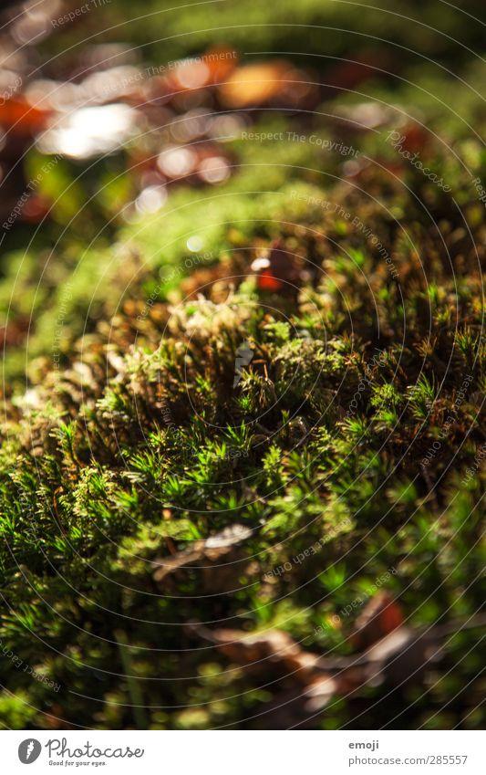 Erdreich Umwelt Natur Landschaft Erde Moos Wald natürlich grün Farbfoto Außenaufnahme Nahaufnahme Detailaufnahme Makroaufnahme Menschenleer Tag