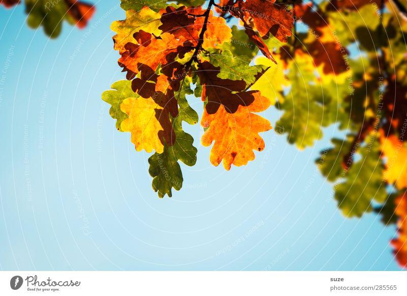 Herbstkleid Himmel Natur blau grün schön Pflanze Blatt gelb Umwelt natürlich orange leuchten ästhetisch Schönes Wetter Jahreszeiten