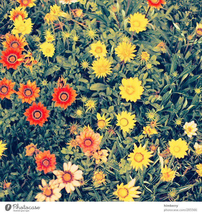 bauer sucht flower Natur Pflanze schön Farbe Blume Blatt Umwelt Blüte Frühling Wiese Garten Feste & Feiern Design Wachstum frisch Geburtstag