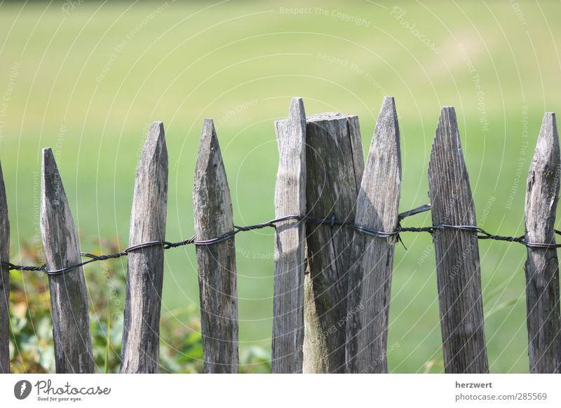 Wink mit dem Zaunpfahl Garten Natur Frühling Wiese Holz grau Begrenzung Gedeckte Farben Außenaufnahme Menschenleer