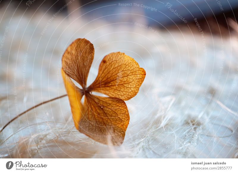 Natur Sommer Pflanze Blume Winter Herbst Frühling Garten braun Dekoration & Verzierung Romantik Beautyfotografie Blütenblatt zerbrechlich geblümt