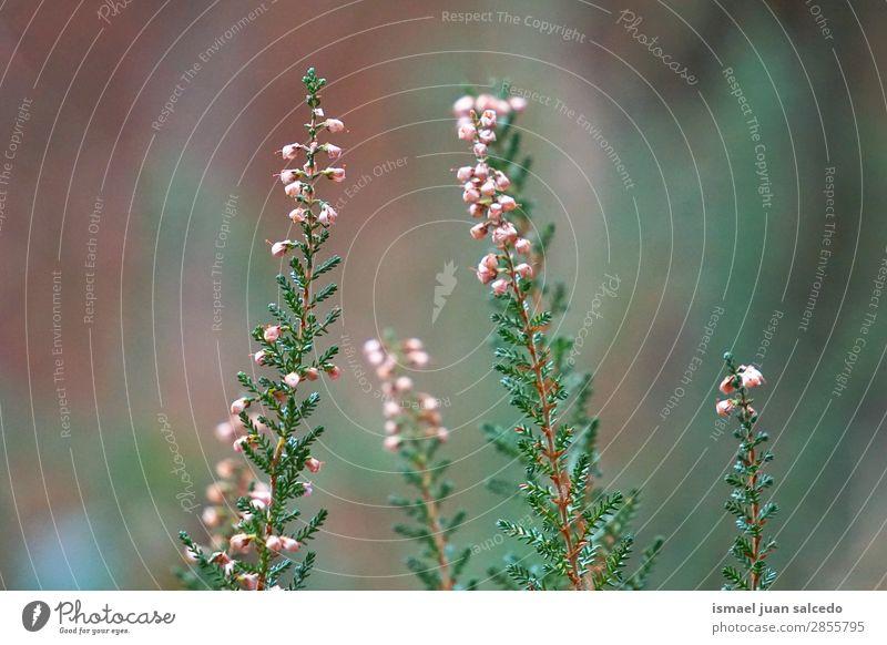 Blumenpflanze im Garten Pflanze Farbe geblümt Natur Dekoration & Verzierung Romantik Beautyfotografie zerbrechlich Hintergrund Frühling Sommer Winter Herbst