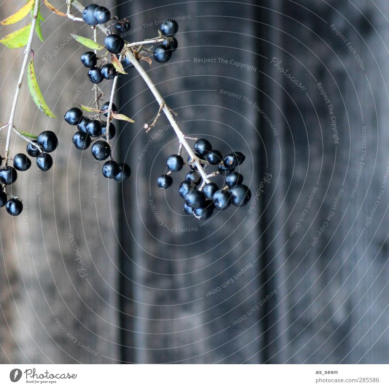 into the dark Natur grün Pflanze ruhig schwarz Umwelt Herbst Holz Garten Gesundheit träumen Frucht glänzend Wachstum ästhetisch Trauer