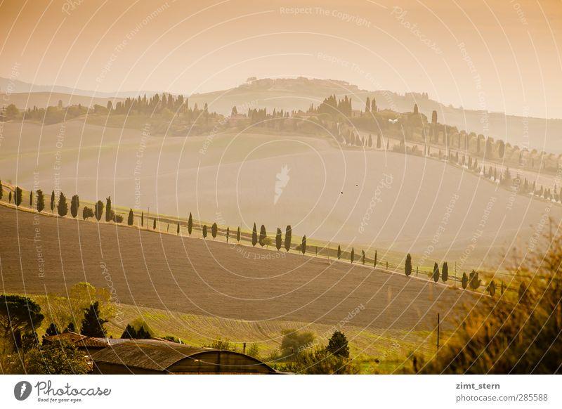 Morgenlicht in der Toskana Wohlgefühl Zufriedenheit Sinnesorgane Erholung Ferien & Urlaub & Reisen Tourismus Ausflug Ferne Landwirtschaft Forstwirtschaft
