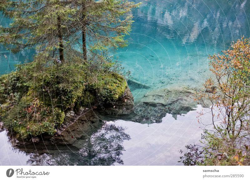 spieglein spieglein... Angeln Natur Landschaft Wasser Küste Insel Teich See nass natürlich schön Seeufer Baum Reflexion & Spiegelung Wasseroberfläche
