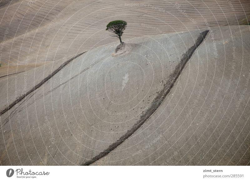 Ein Baum harmonisch Wohlgefühl Zufriedenheit Ferien & Urlaub & Reisen Tourismus Ausflug Natur Landschaft Urelemente Erde Herbst Feld Hügel Toskana Crete