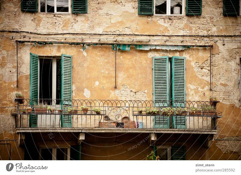 Balkonien mediterran Ferien & Urlaub & Reisen Tourismus Ausflug Häusliches Leben Haus Pflanze Siena Toskana Italien Stadt Stadtzentrum Fassade Fenster