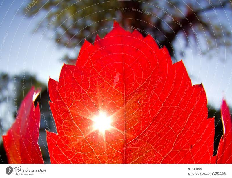 Rotlicht Umwelt Natur Landschaft Pflanze Himmel Herbst Klima Wetter Baum Blatt fallen leuchten Wachstum dünn hell natürlich Wärme rot Loch Sträucher Färbung
