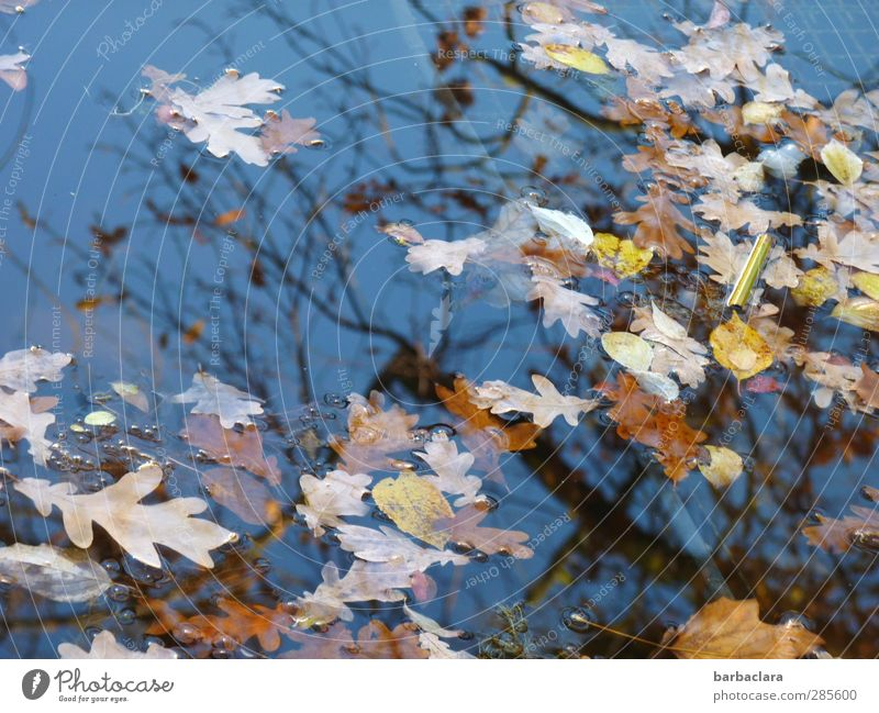 sich verändern... Umwelt Luft Wasser Himmel Sonnenlicht Herbst Schönes Wetter Baum Blatt Park Teich See fallen Schwimmen & Baden viele wild blau braun gelb