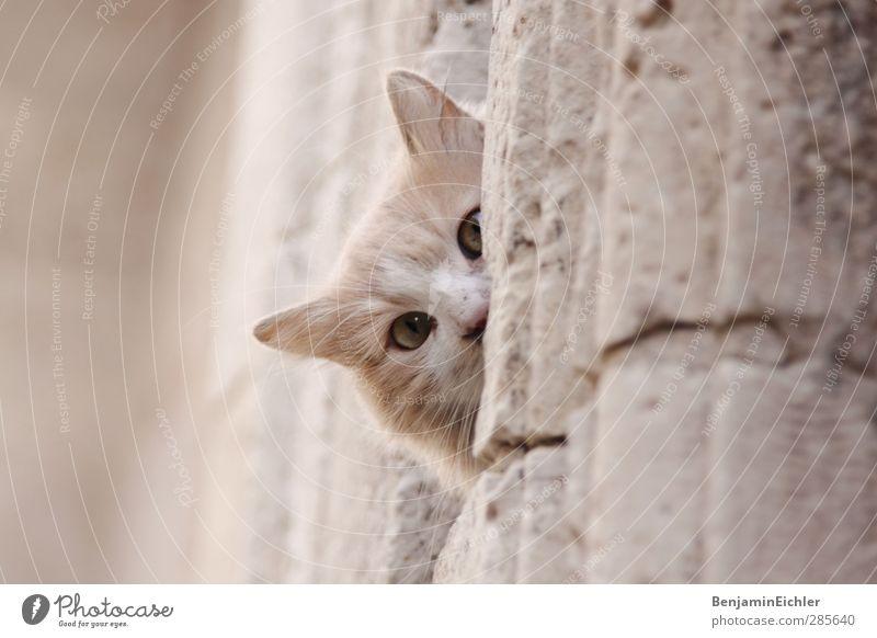 the look Katze schön Tier Spielen grau hell Erde Zufriedenheit Armut warten leuchten ästhetisch Kommunizieren beobachten gut Freundlichkeit