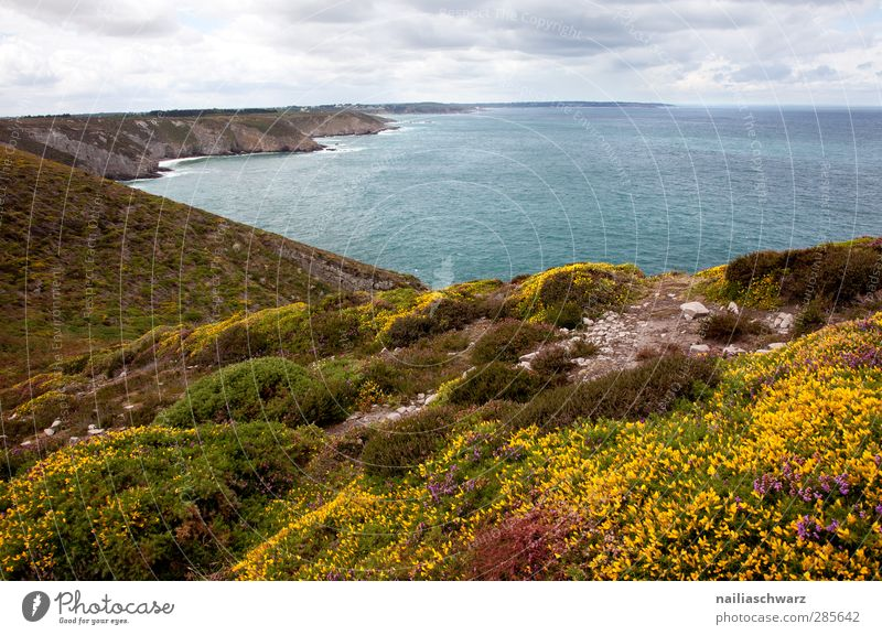Cap Frehel Umwelt Natur Landschaft Pflanze Erde Wasser Himmel Wolken Sommer Heide mehrfarbig Blumenwiese Küste Meer Atlantik Bretagne Klippe blau braun gelb