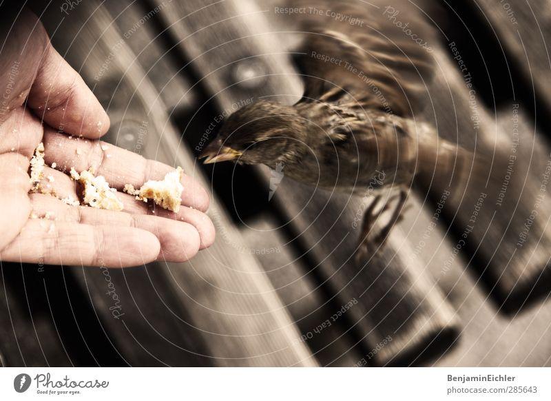free ass a bird Mensch Jugendliche Ferien & Urlaub & Reisen Hand Freude Tier Erwachsene 18-30 Jahre Vogel braun fliegen Haut Freizeit & Hobby Wildtier Zufriedenheit Tourismus