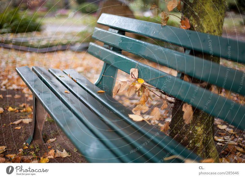 ruheplatz Natur grün Baum Einsamkeit Blatt ruhig Landschaft Erholung Herbst Park sitzen warten Idylle Spaziergang Pause Vergänglichkeit