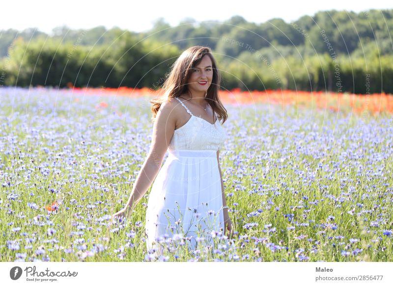 Porträt einer jungen Frau schön blau Mädchen Haare & Frisuren Glück Lifestyle Natur Junge Frau Feld Model Frühling Sommer attraktiv Kornblume Blume Wiese
