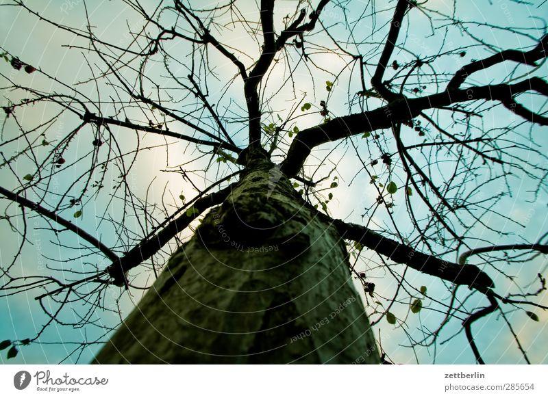 Apfelbaum im Herbst Freizeit & Hobby Garten Umwelt Natur Himmel Wolken Winter Klima Klimawandel Wetter Schönes Wetter Pflanze Baum Park alt kalt anstrengen