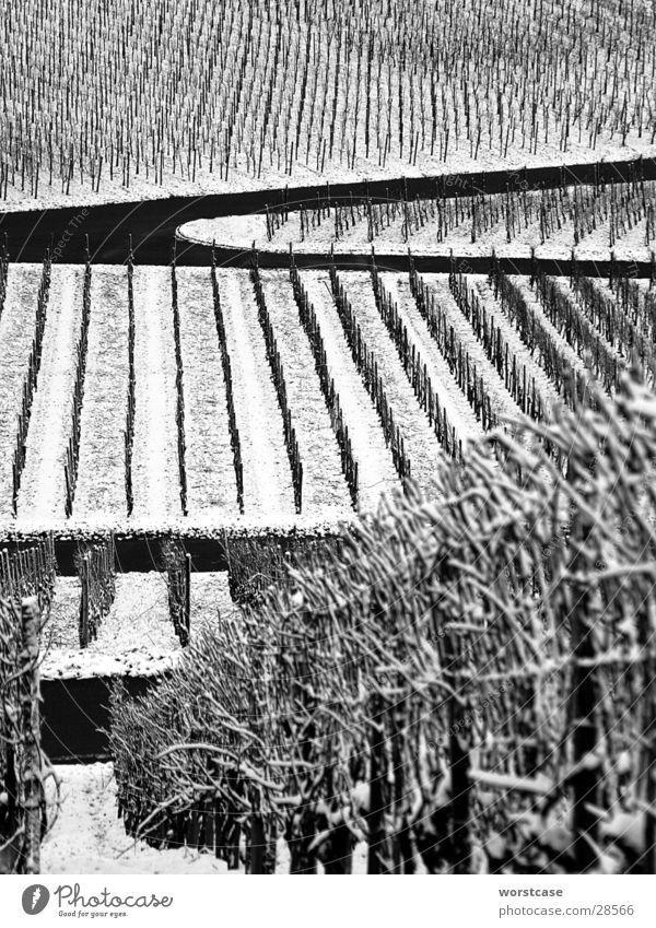 weinberg im winter Winter grau Reihe Weinberg
