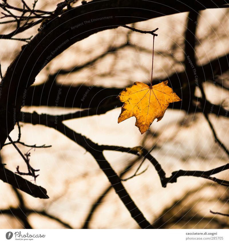 facing the death Natur Pflanze Baum Einsamkeit Blatt schwarz Wald gelb dunkel Herbst Tod Traurigkeit Park leuchten trist Wandel & Veränderung